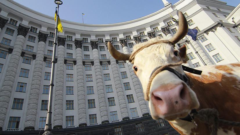 Попали в молоко: как стандарты ЕС угрожают развалом целой отрасли Украины