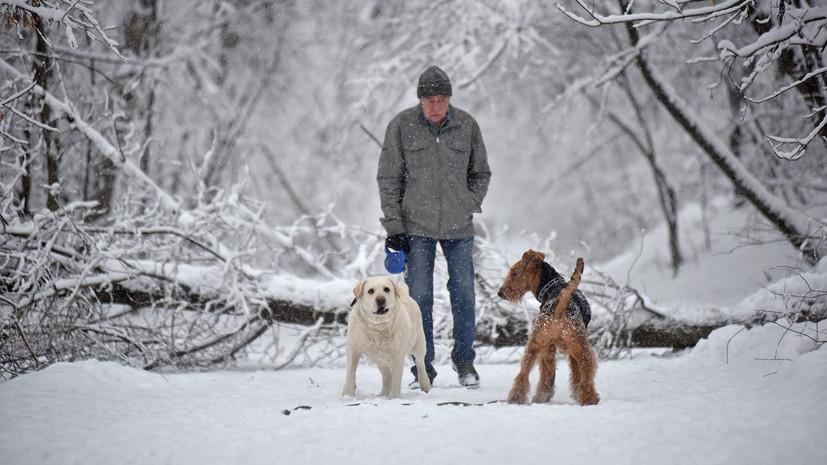 В Москве из-за непогоды повалено свыше двух тысяч деревьев