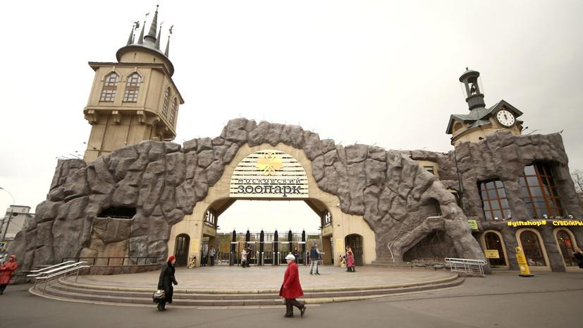 В Московском зоопарке появились птенцы пингвина Гумбольдта