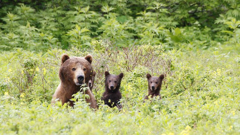 Шкуры, деньги, два ствола: как работают ловцы браконьеров в России