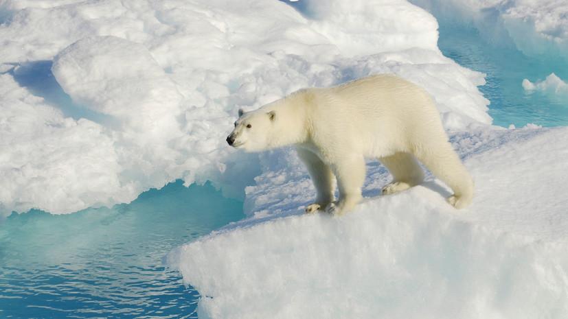 В отпуск к белым медведям: в Ростуризме заявили о росте спроса на арктическое направление