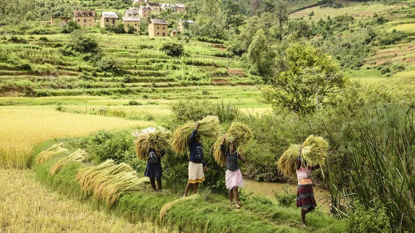 Парламент ЮАР проголосовал за экспроприацию земли у белых фермеров без компенсации