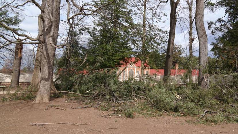 СМИ: В США из-за ветра упало посаженное Джорджем Вашингтоном 227-летнее дерево