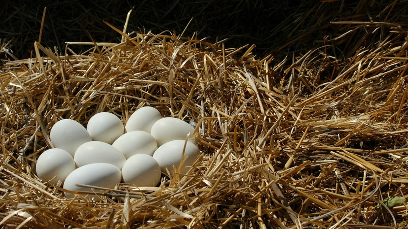 Россия ограничила ввоз живой птицы и яиц из региона Нидерландов