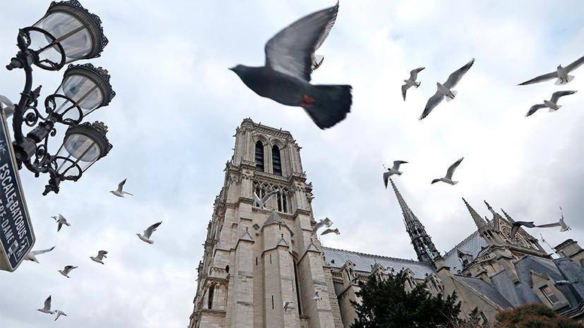 Учёные сообщили о сокращении популяции птиц на треть за последние 15 лет во Франции