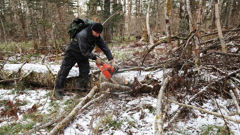 Госдума одобрила законопроект о свободном сборе валежника в лесу