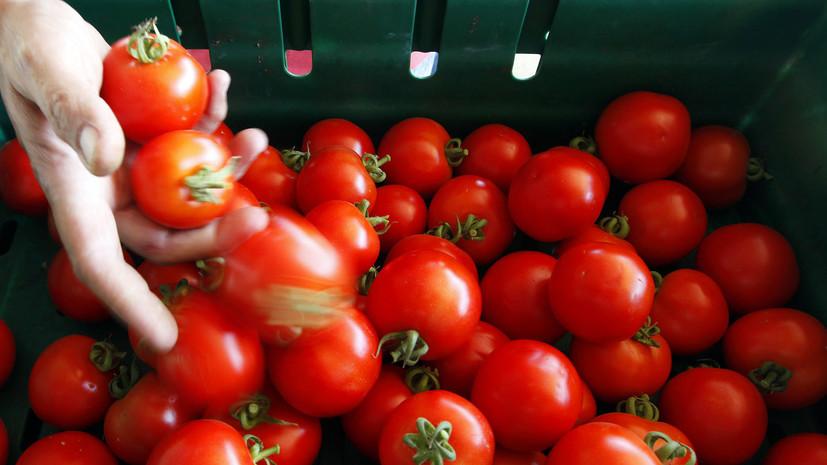 Россельхознадзор заявил о готовности расширить список поставщиков томатов из Турции