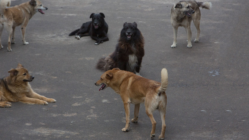 В Екатеринбурге организована проверка после нападения собаки на ребёнка
