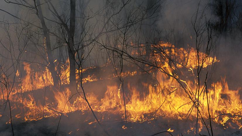 В Приамурье из-за лесных пожаров введён режим ЧС