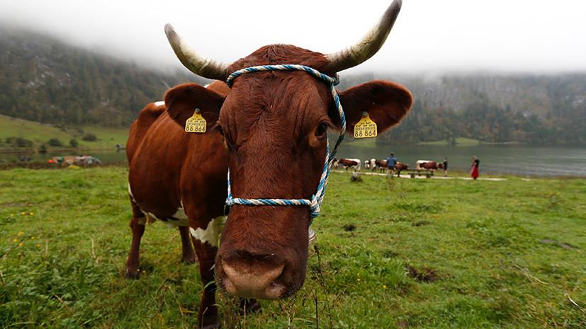 Россельхознадзор разрешил ввоз животных из двух австрийских регионов