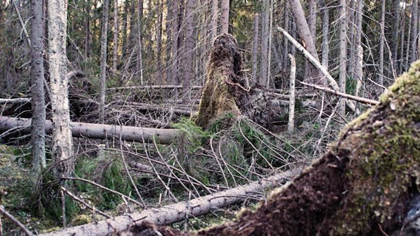 Совфед одобрил закон о свободном сборе валежника в лесу