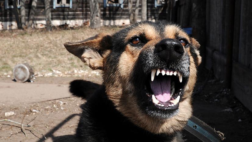 В Ижевске начали проверку из-за нападения собак на ребёнка