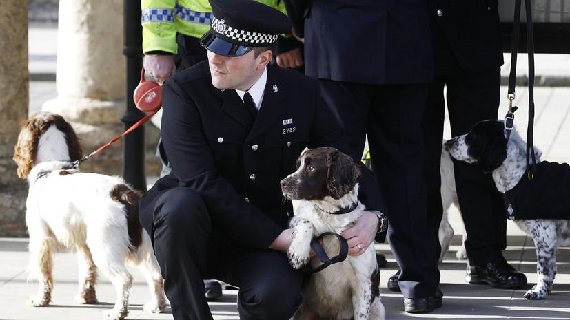 Антидопинговое агентство Великобритании привлечёт псов-ищеек для борьбы с запрещёнными препаратами