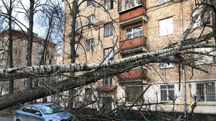 Синоптики рассказали о прошедшем в Московском регионе урагане