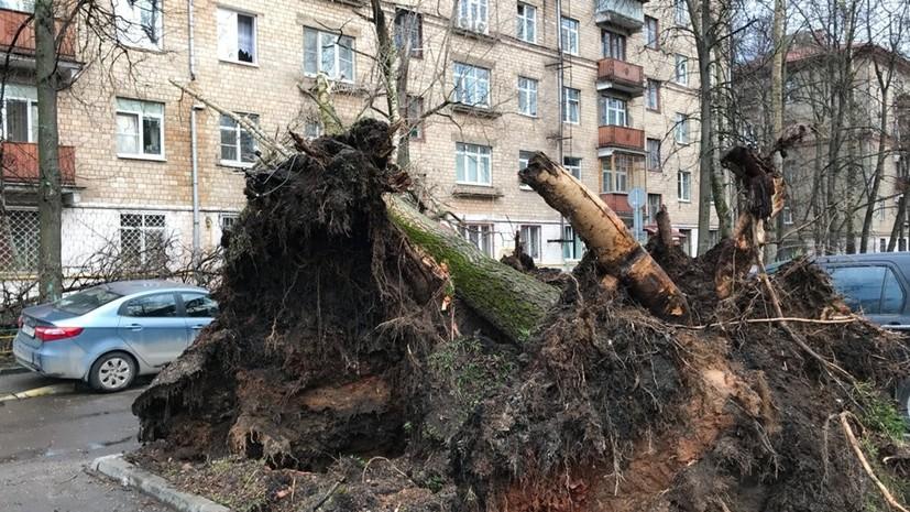 В Москве из-за урагана повалено более 580 деревьев и повреждено свыше 90 машин