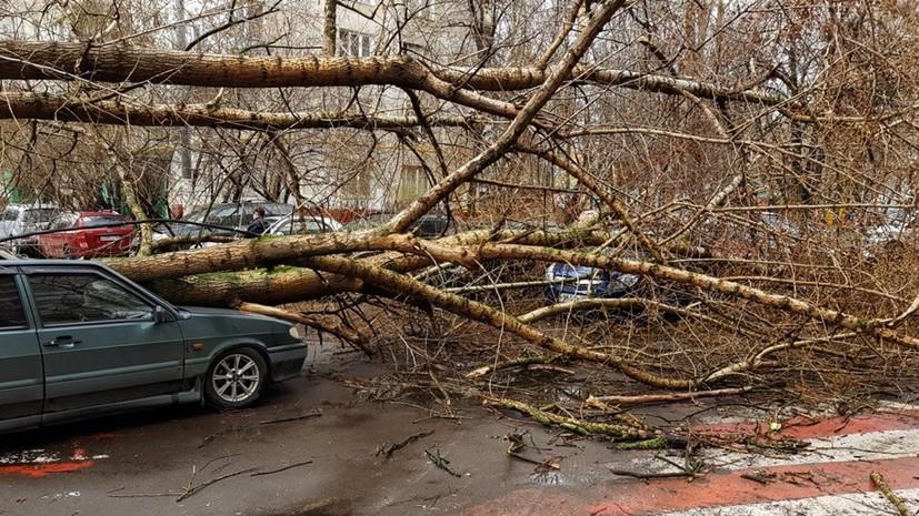 Прокуратура взяла на контроль проверку смерти мужчины из-за урагана в Подмосковье