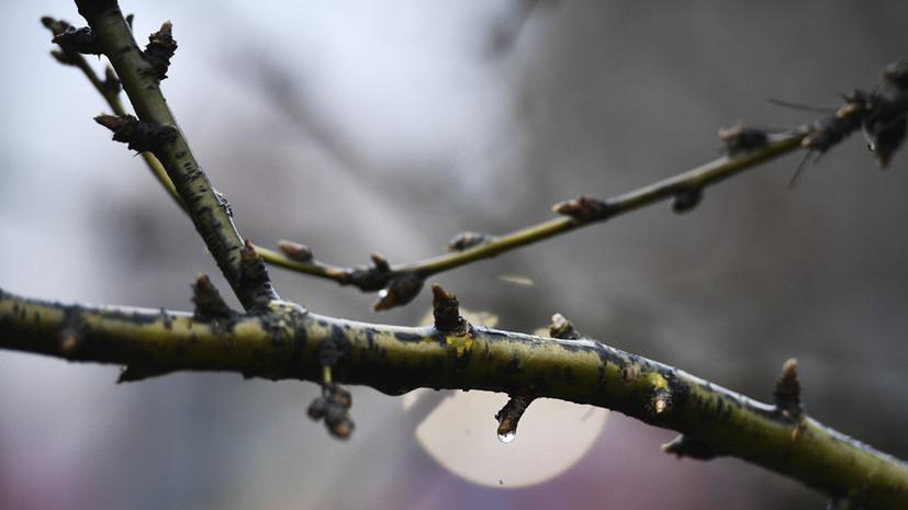 В Москве 23 апреля ожидается до +9 °С