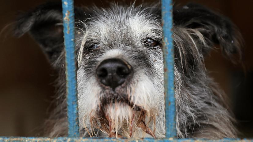 СК: в Красноярском крае бешеная собака напала на ребёнка