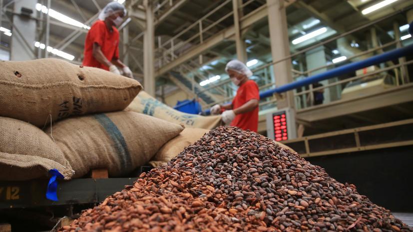 Как мировой рост стоимости какао-бобов может отразиться на кондитерской индустрии России