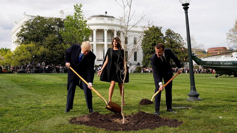 СМИ: С лужайки Белого дома пропал посаженный Трампом и Макроном дуб