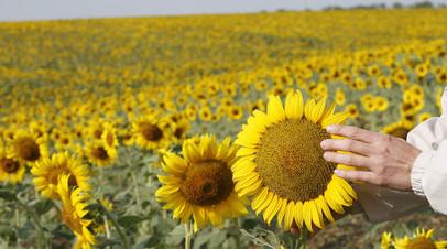 «Устойчивый спрос»: в США сообщили о росте российского экспорта масличных культур