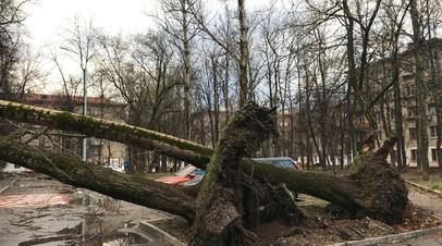 С дорог Московской области вывезли более 450 упавших во время урагана деревьев