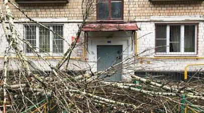 В Москве завершили работы по уборке поваленных после урагана деревьев