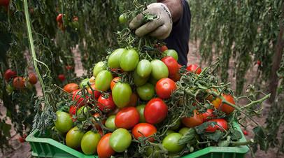 Россельхознадзор разрешает поставки томатов ещё пяти турецких предприятий