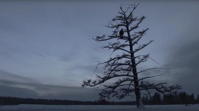 Фильм «Царь-птица» получил главный приз ММКФ-2018