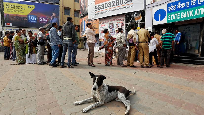 В Индии бродячие собаки убили шестерых детей