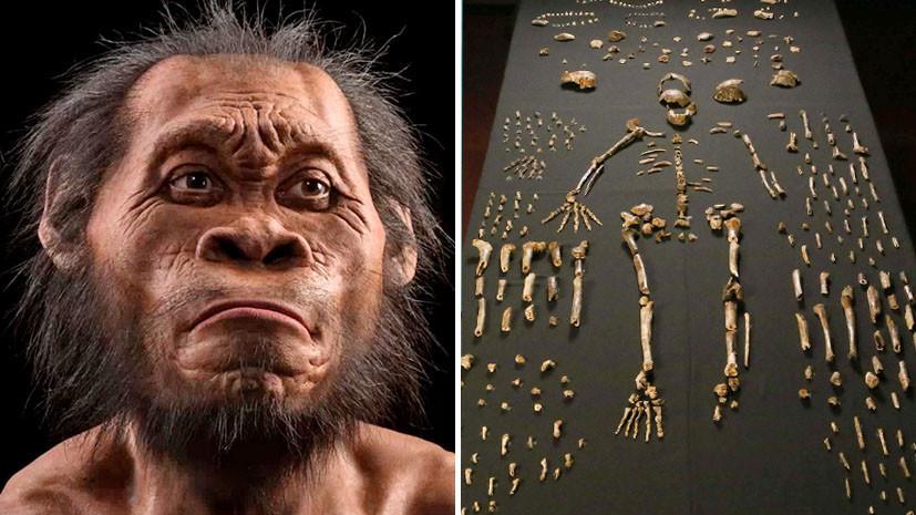 Объём не имеет значения: учёные усомнились в умственном превосходстве sapiens над другими представителями рода Homo