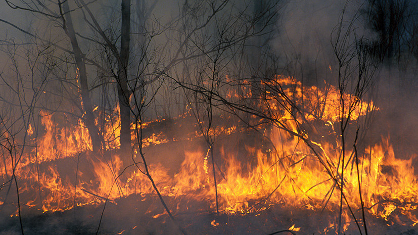 МЧС предупредило о высокой пожароопасности в Подмосковье 17 и 18 мая
