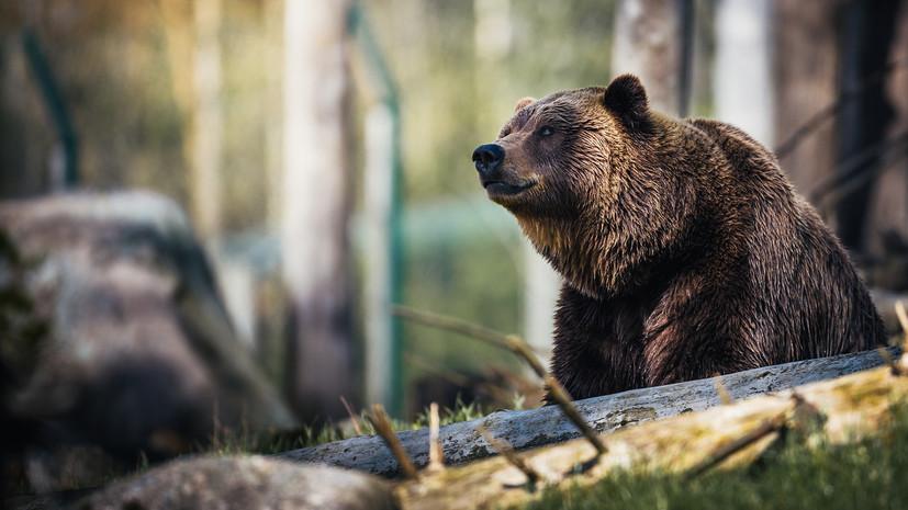 Медведь в кузбасской тайге «помог» молодым людям вызвать спасателей