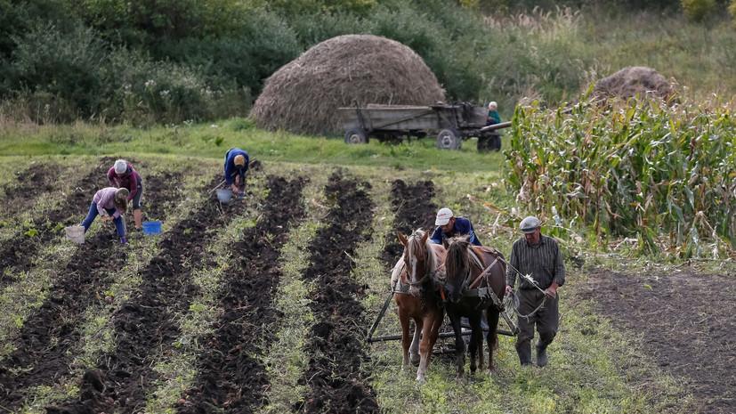 «Миллионы людей будут никому не нужны»: к чему может привести отмена моратория на продажу земли на Украине