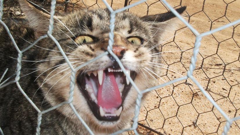 В Австралии построили забор для защиты от диких кошек