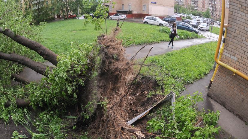Источник: в результате падения деревьев в Москве пострадали шесть человек