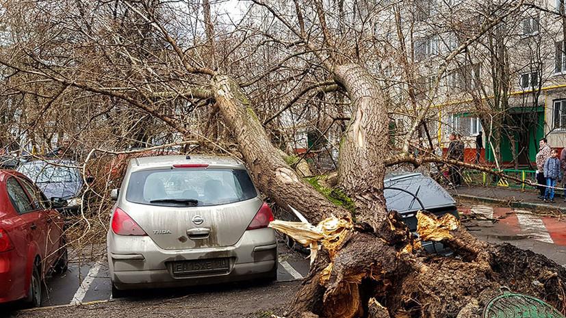 Закрытые парки, поваленные деревья и сорванные крыши: в Центральной России и Поволжье ликвидируют последствия урагана