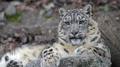 В Госдуму внесён проект о запрете держать дома диких животных