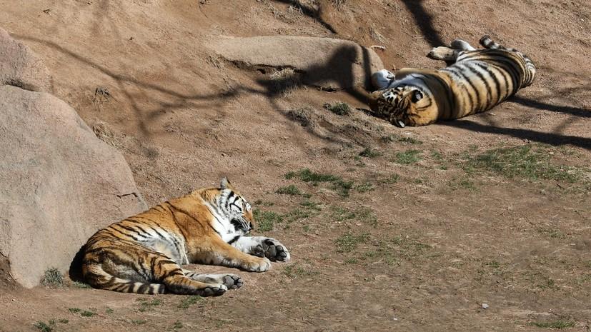 Сбежавшие из зоопарка в Германии хищники пойманы