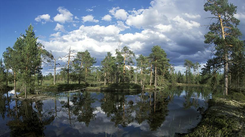 Курская область в пятерке регионов с лучшей экологией