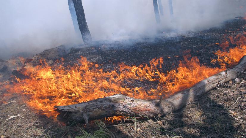 В Дагестане произошёл природный пожар на площади 100 га