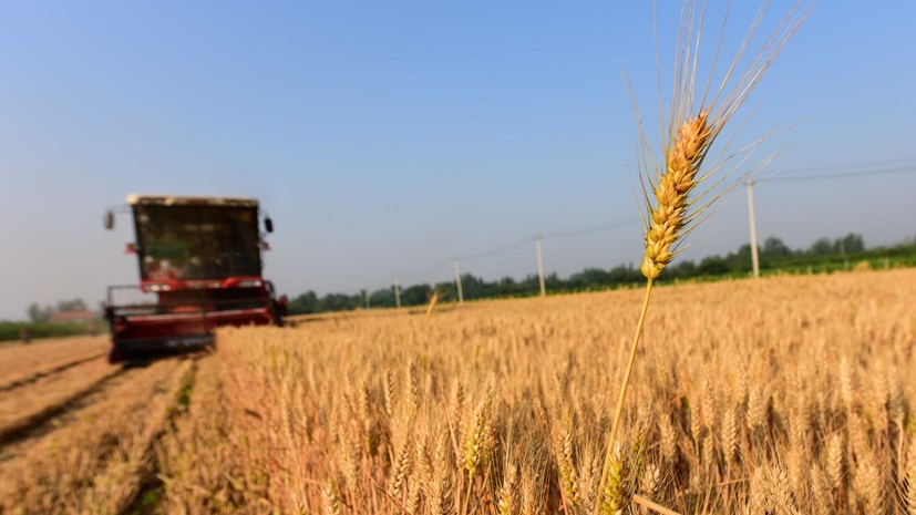 На Украине заявили о возможности потери половины урожая зерновых из-за засухи