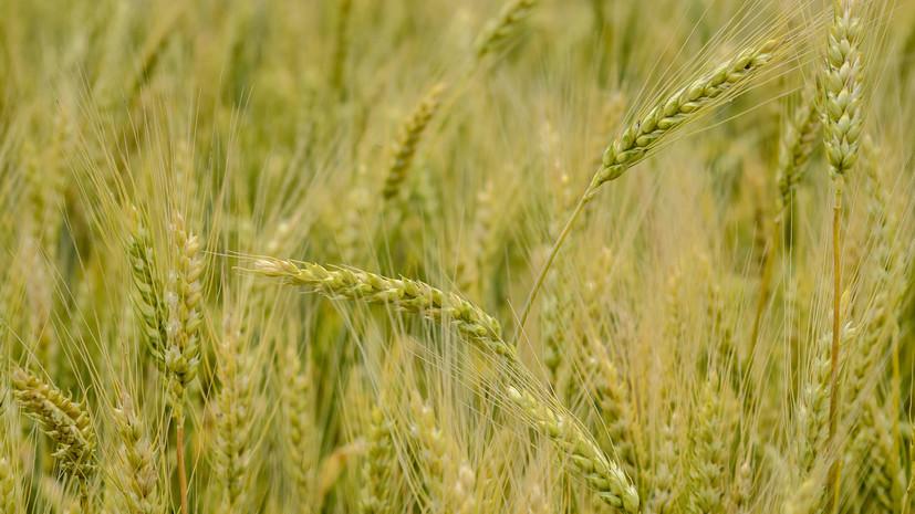 В Минске рассчитывают на снятие барьеров в поставке сельхозпродукции Москве