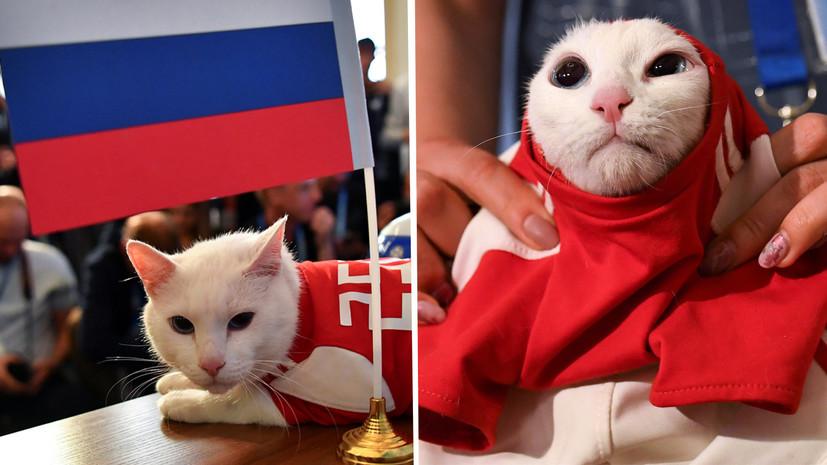 В пользу хозяев: кот Ахилл предсказал сборной России победу над Саудовской Аравией в матче открытия ЧМ-2018