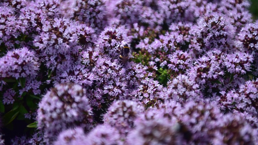 Фестиваль садов и цветов откроется 29 июня в Москве