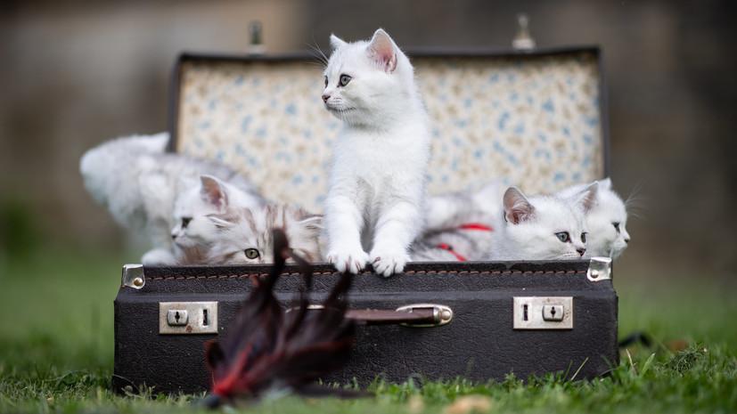 В Ижевске 24 июня пройдёт выставка кошек «Хочу домой»