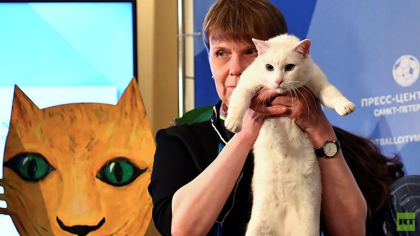Эрмитажный кот Ахилл предсказал победу сборной России над Египтом на ЧМ-2018 по футболу
