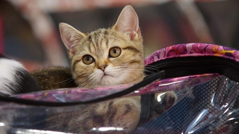 Жителя Петербурга оштрафовали на 35 тысяч рублей за кражу кошки