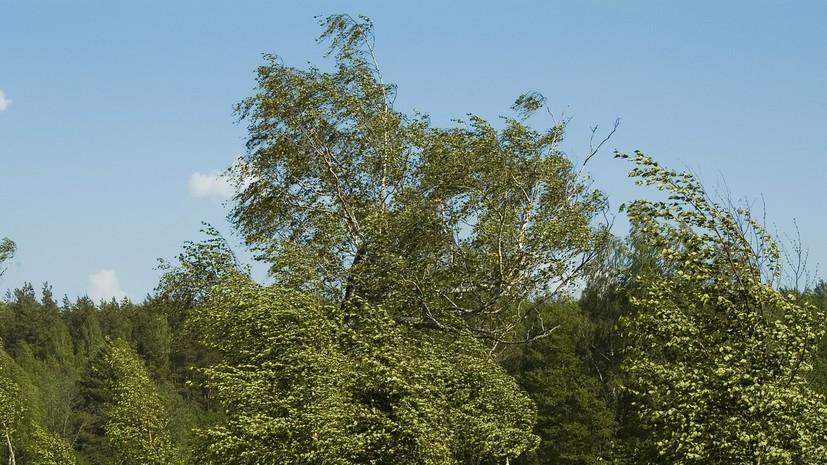 Порывы ветра до 22 м/с ожидаются в Кировской области 20 июня