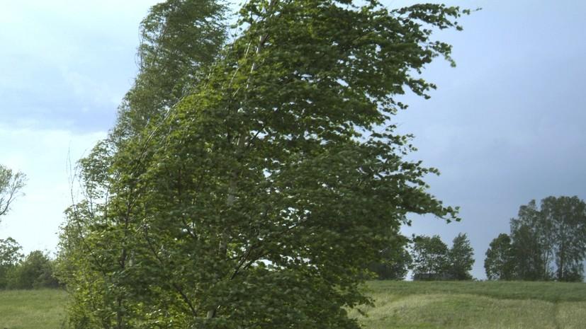 Спасатели предупредили о порывах ветра до 20 м/с в Челябинской области
